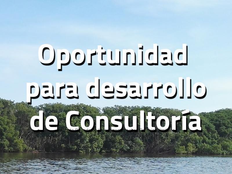 vacantes consultoria